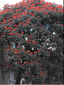 Crecen en Cuba más de 300 especies de plantas invasoras
