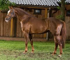 silla argentino caballo ecured
