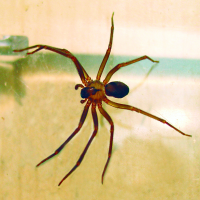 Brown-recluse-spider 200x200.jpg.png