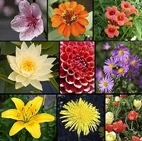 Plantas con flores ecured for Como se llaman las plantas ornamentales
