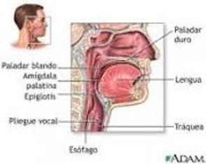 Rinitis Vasomotora Ecured