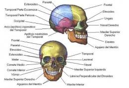 Cráneo Ecured