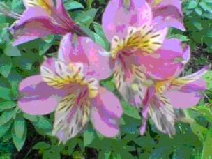 El cuerpo de las plantas ecured for Como se llaman las plantas ornamentales