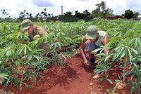 Destacan en Camagüey labor del Ejército Juvenil del Trabajo