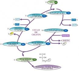 procesos catabolicos y anabolicos de la celula
