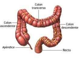 Intestino-grueso .jpg
