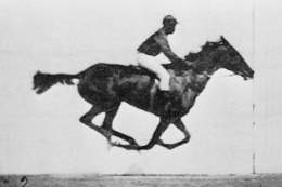 Muybridge race horse.jpg