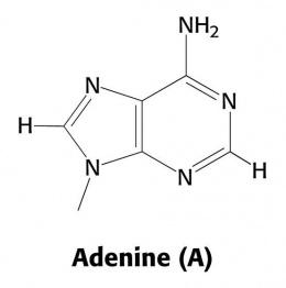 Adenina ecured for Molecula definicion