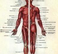 Funciones del cloruro de magnesio en el cuerpo humano