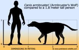 Canis-armbrusteri-armbrusters-wolf-size.jpg