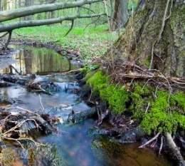 tema 3.  las aguas corrientes rios, arroyos, afluentes, sus etapas evolutivas,sus formas de desembocaduras,sus vertientes los principales rios del mundo 260px-Arroyo_1
