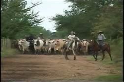 El Canto De Los Vaqueros Ecured