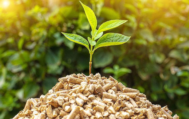 Biomasa - EcuRed