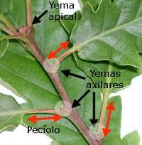 Fisiología vegetal - EcuRed