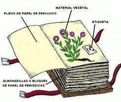Herbario ecured for Botanica general pdf