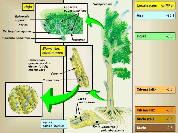 fisiologia vegetal libro pdf