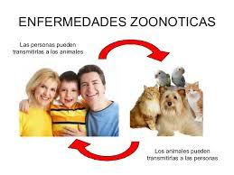 parásitos intestinales zoonóticos