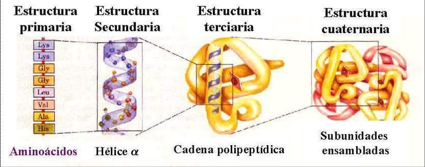Principio De Organización De Las Macromoléculas Ecured