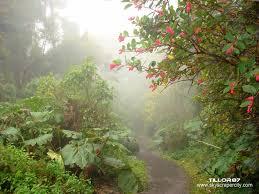 bb780c871bf Vegetación del bosque nuboso de Barva