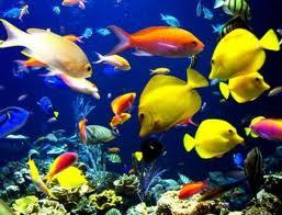 Los en del funcion peces higado