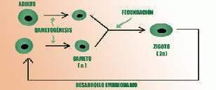 Tipos de reproduccion parasexual