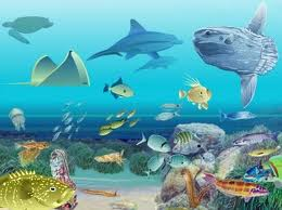 Resultado de imagen de La diversidad de la vida en los océanos