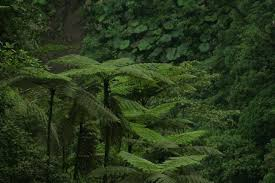 b107f232ba0 Plantas de helechos que conforman la vegetación del bosque