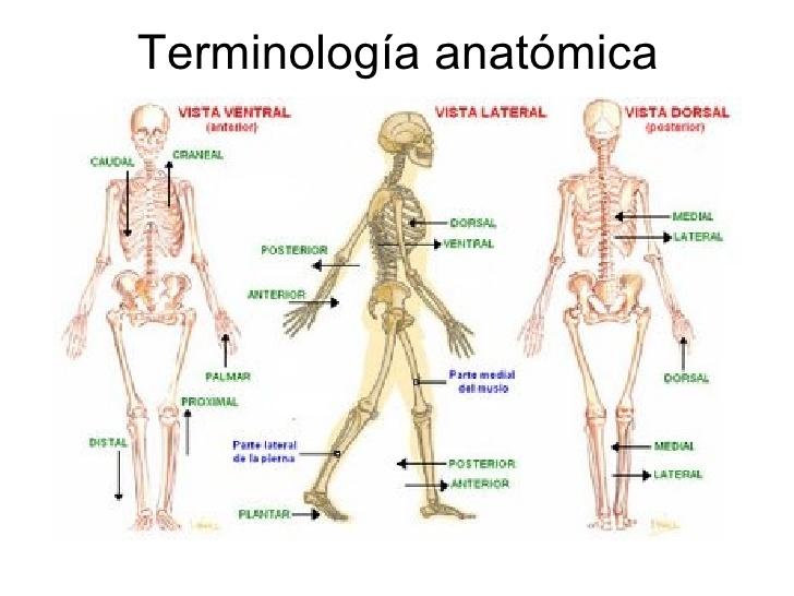 Terminos de relacion y comparacion anatomia pdf