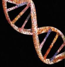 Genoma Humano Ecured