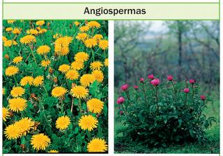 Plantas con flores ecured for Concepto de plantas ornamentales