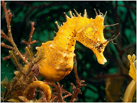 Transseahorse.png