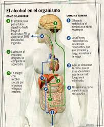 Esteatosis hepatica alcoholica sintomas