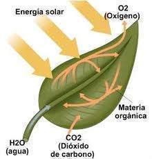 Entrar en regulacion hormonal del metabolismo