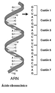 Código Genético Ecured
