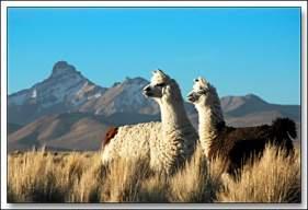 Cordillera De Los Andes Ecured