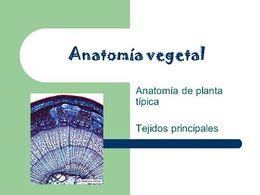 Anatomía Vegetal Ecured