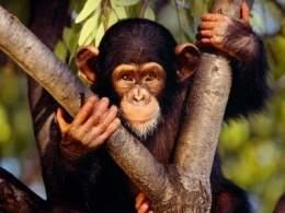 Primates Ecured