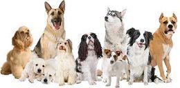 Dia internacional del perro.jpg
