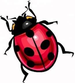 Mariquita Insecto Ecured