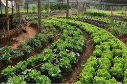 Agroecología Ecured