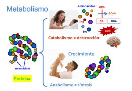 Procesos Metabólicos Ecured
