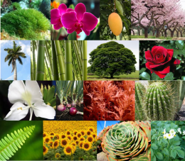 Planta - EcuRed on