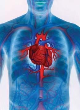 e89fd9bd84199 Enfermedades cardiovasculares - EcuRed